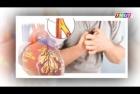 Bệnh viện Tâm Trí Đồng Tháp: Biện pháp phòng chống bệnh mạch vành